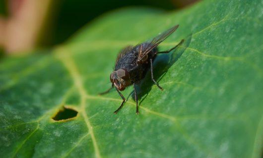 Por qué no hay moscas en invierno